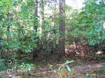 8.7 Acres with Mountain Views, Creeks and Spring. Can be divided. Close to Black Mountain, Lake Lure and Asheville NC.